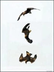 Fly Kill Em & Eat Em3